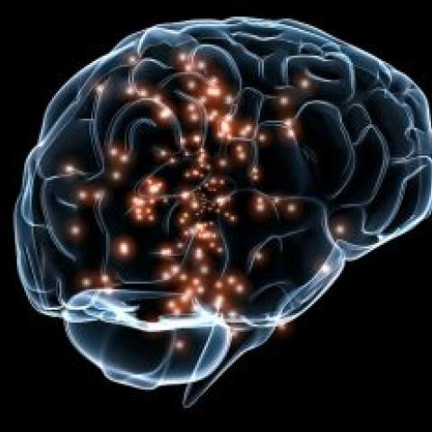 Transparent brain with lit up neurons