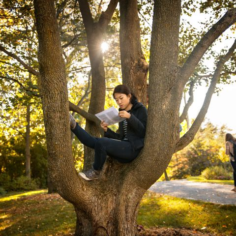 Cornell student studies in a tree in fall.